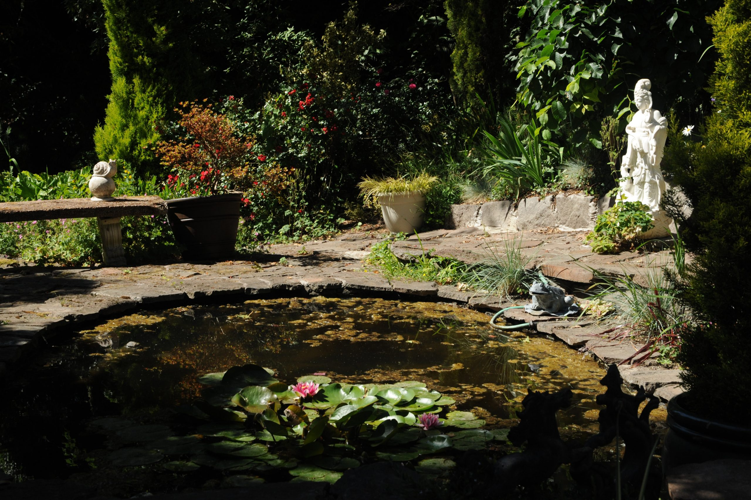 How to drain a pond - 3 easy ways