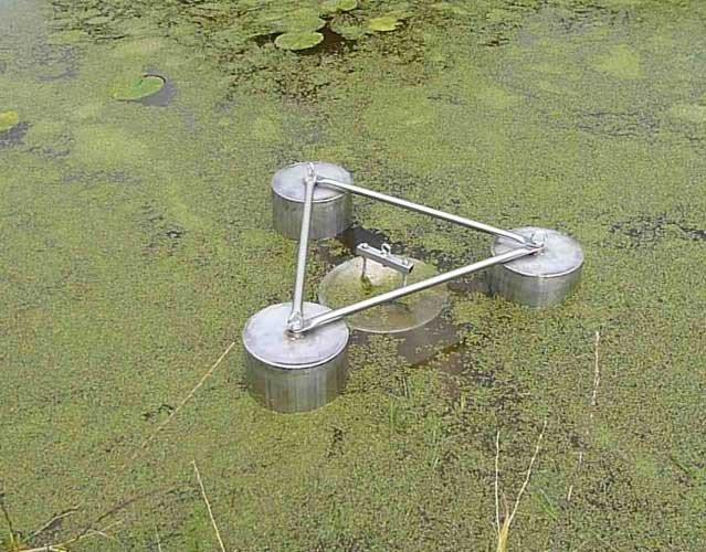 Duckweed Removal