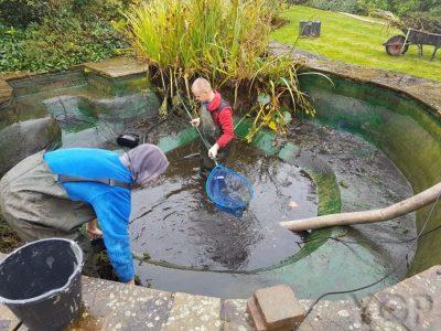Drain a Pond